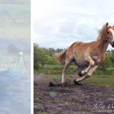 Tierfotografie im Norden ~ Pferde