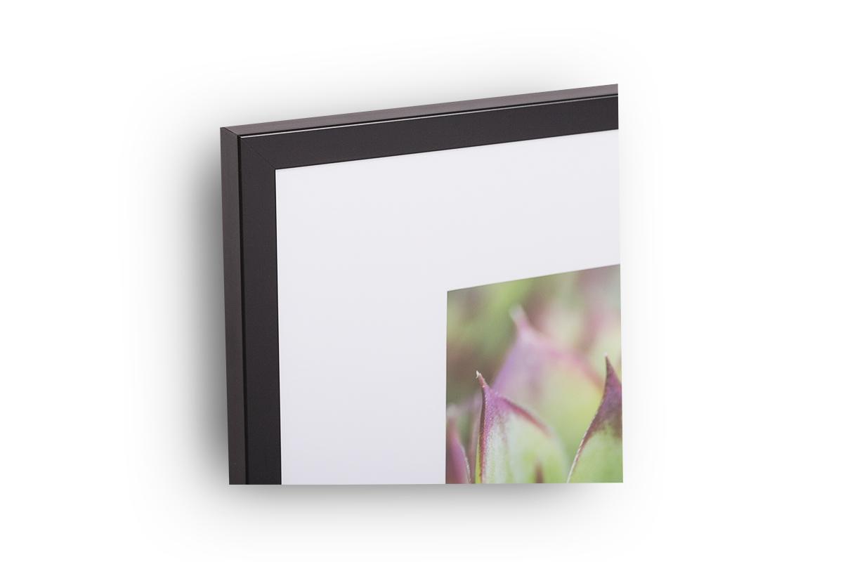 gerahmter fotodruck sukkulente 40cm x 50cm rahmen mit passepartout julia pinnau fotografie. Black Bedroom Furniture Sets. Home Design Ideas