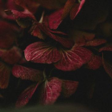 Herbst im Garten – Naturfotografie