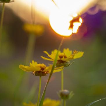 Blumen im Sonnenuntergang – Naturfotografie