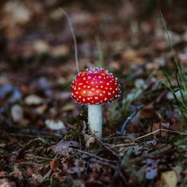 Pilze und Beeren in der Bordelumer Heide – Naturfotografie in Nordfriesland