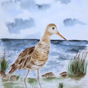 Aquarell – Uferschnepfe 17cm x 24 cm